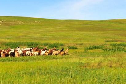 Mongolie, patrie de Gengis Khan