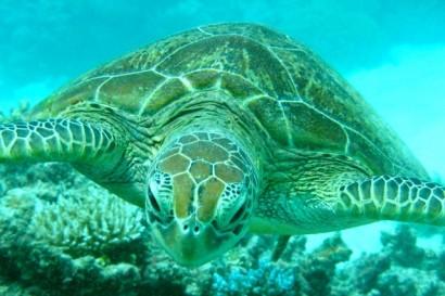 AP13-AUS-Grande Barrière de corail02